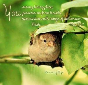 hiding place bird