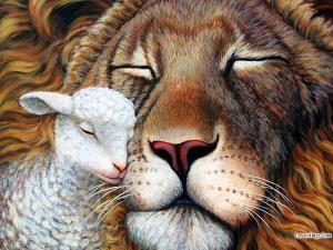 lion-and-lamb-best-friends-fahad-photographer