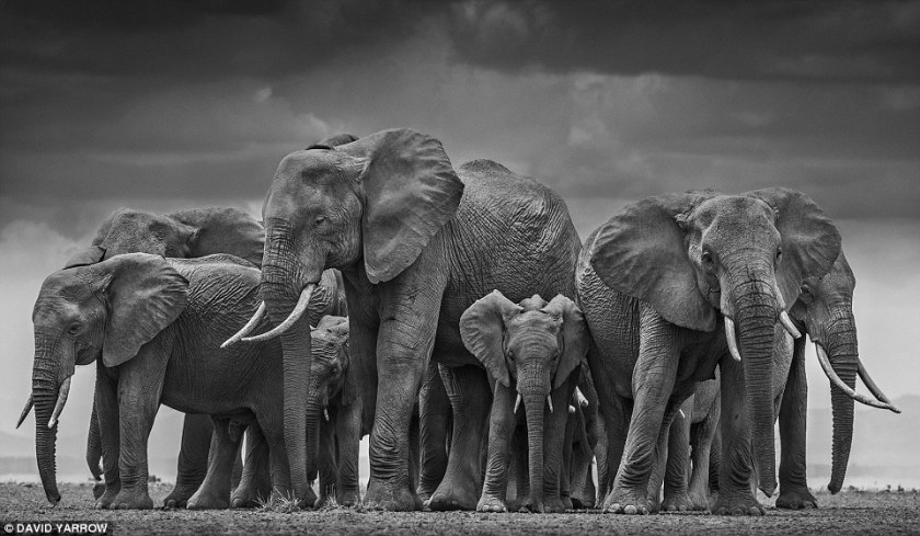 circle of elephants