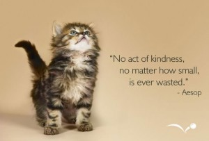 no act of kindness kitten