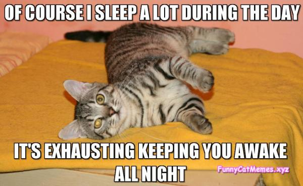 of course i sleep its exhausting keeping you up all night