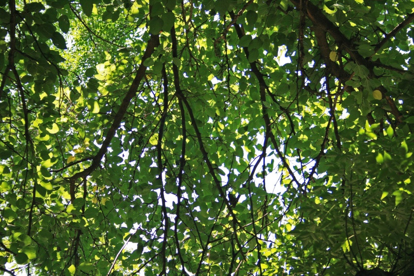 light-through-the-leaves