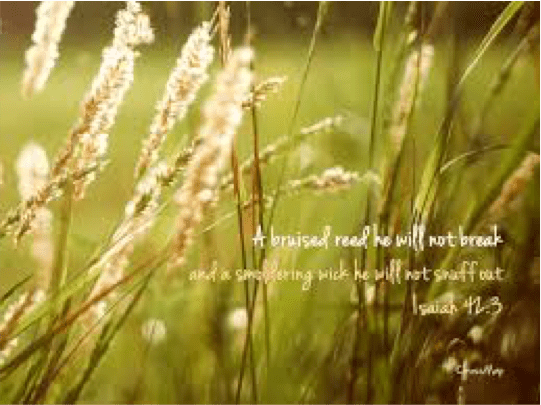 We Are ALL Bruised Reeds from Henri Nouwen