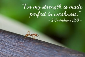 strength made perfect in weakness ant