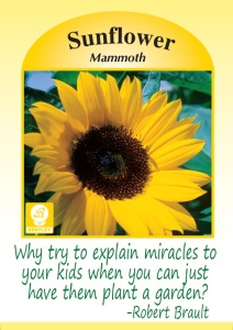 sunflower explain miracles plant a garden
