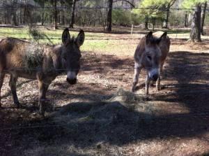 bob and paco hay