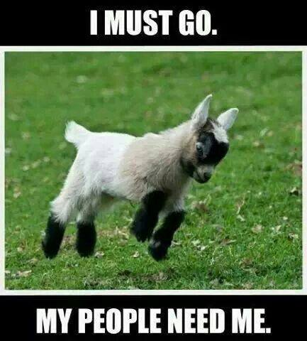 goat i must go my people need me