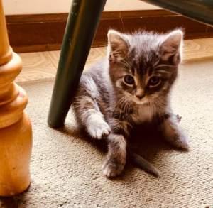 Tilly under kitchen chair 6_16_19